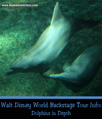 Dolphins in Depth Tour at Epcot