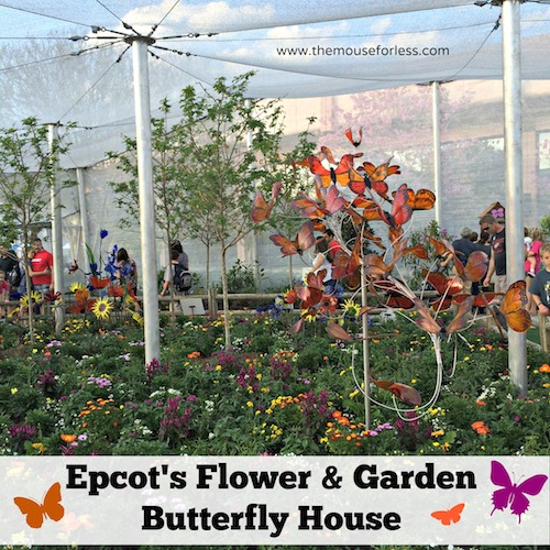 Epcot International Flower and Garden Festival Butterfly House from themouseforless.com #DisneyWorld #FlowerandGarden