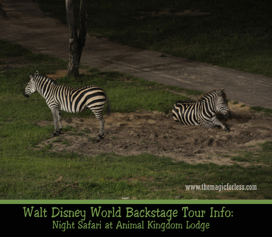 Night Safari at Animal Kingdom Lodge at Disney's Animal Kingdom Lodge