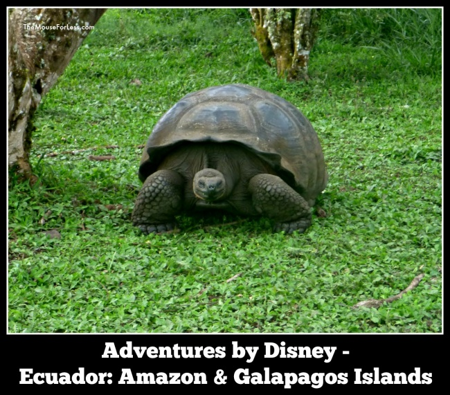 ABD ecuador | Adventures by Disney Ecuador: Amazon and Galapagos Islands