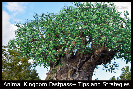 Animal Kingdom Fastpass+ Tips and Strategies