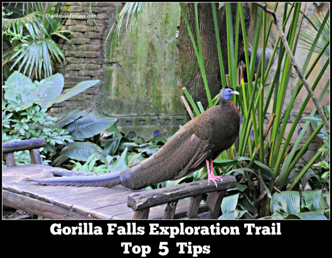 gorillas-falls-tips