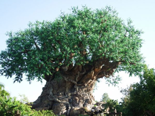 The Tree of Life - Educational Activities at Disney's Animal Kingdom