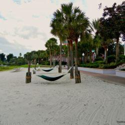 Caribbean Beach Hammocks