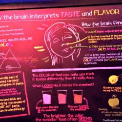 Epcot Food & Wine Festival - Light Lab Booth